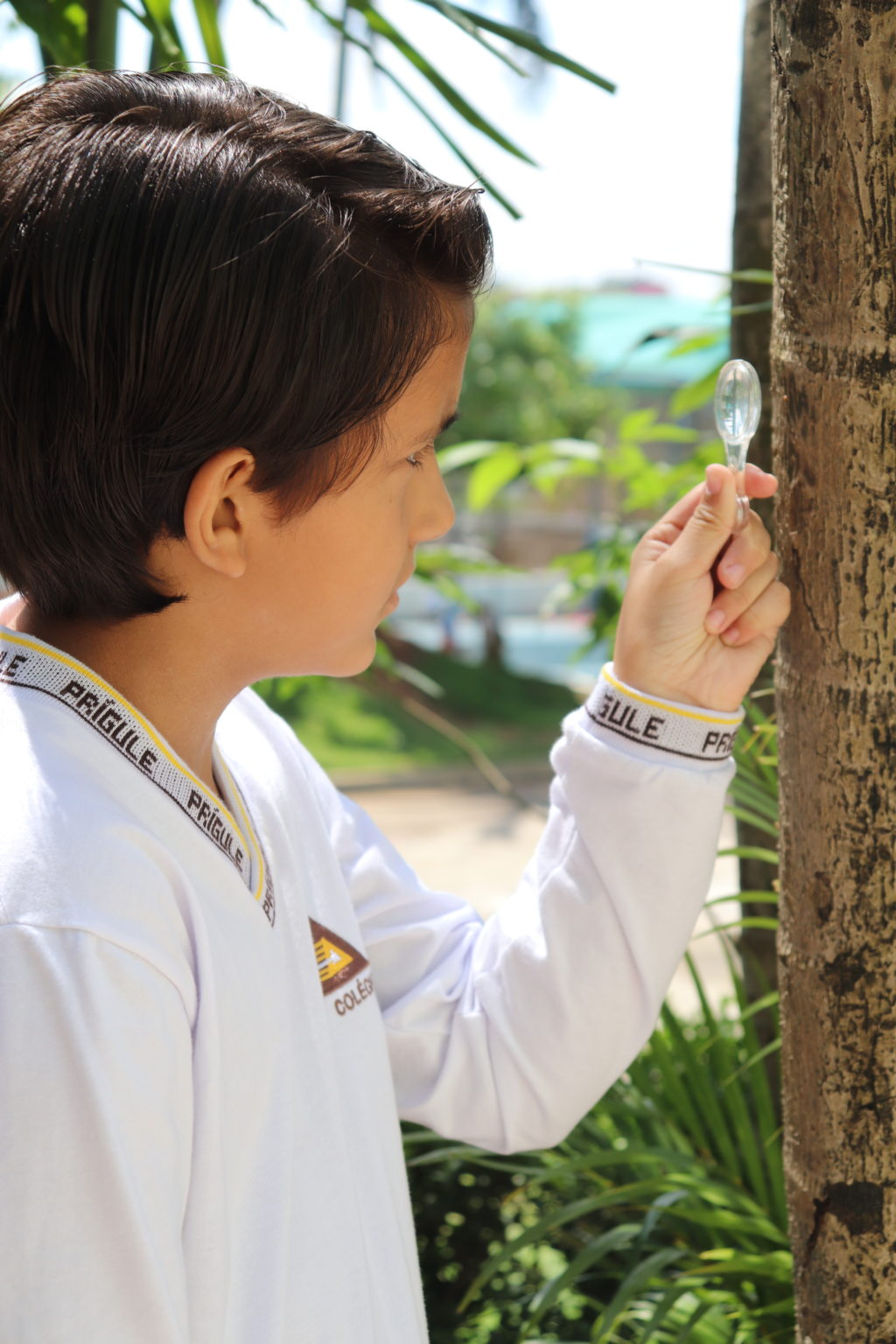 Aluno com mini lupa observando tronco de árvore